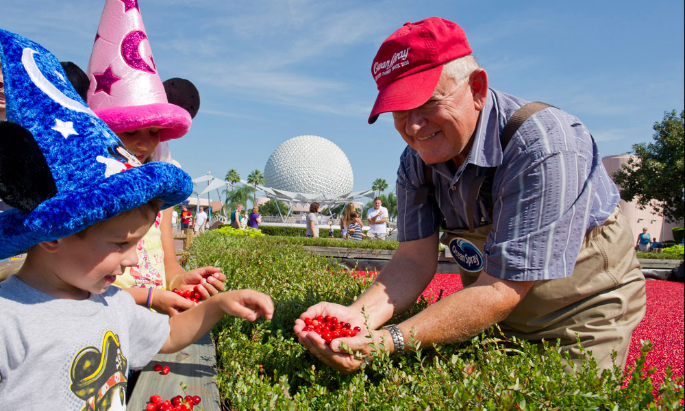 Best Drinks At Epcot Food And Wine Festival