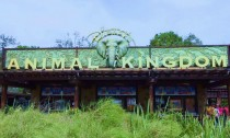 Disney's Animal Kingdom in Orlando Florida.