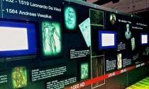 Our Body: The Universe Within is an attraction on International Drive that shows real human bodies.
